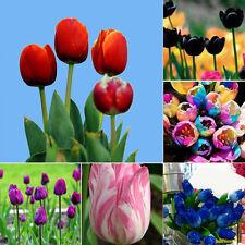 Rare Rainbow Tulip Flower Bulbs Seeds Perennials Spring Bloom Garden Home Bonsai