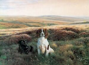 Steven-Townsend-WORKMATES-Springer-Spaniels-Labradors