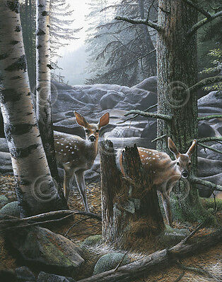 WILDLIFE ART PRINT White Tail Fawns by Kevin Daniel Deer Doe Poster 11x14