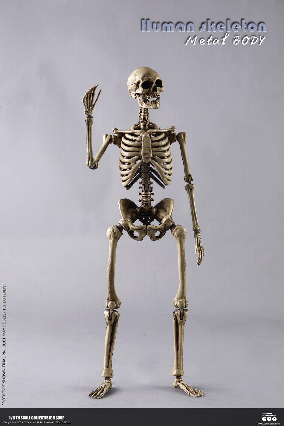 1  6 COOmodellololo BS011 The Huuomo Skeleton W Brain corpo Poseable 12'' Solider cifra  rivenditore di fitness