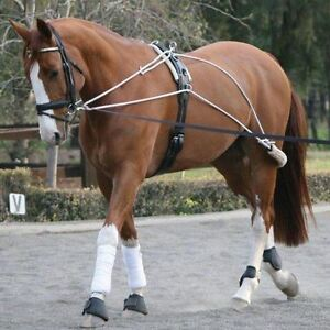 White Horse Equestrian Pessoa Lunging Schooling System