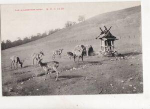 Mikasayama-Nara-Japan-Vintage-Postcard-304b