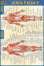Quick Study Ser.: Anatomy (2003, Book, Other)