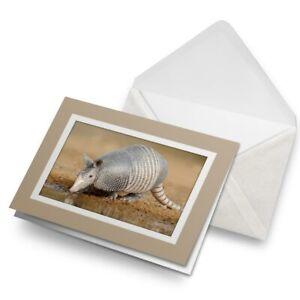 Greetings-Card-Biege-Texan-Armadillo-Animal-Desert-15712