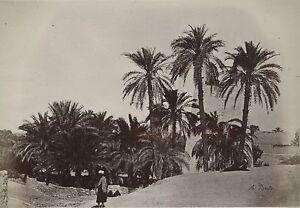 Egitto Karnak Foto Albumina Di Beato IN Piccolo Formato 9x13cm Ca 1880