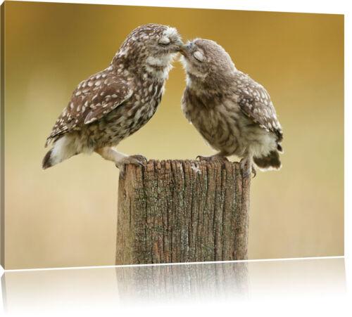 Küssende Eulen Leinwandbild Wanddeko Kunstdruck