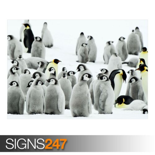 ANTARCTICA PENGUINS 3692 Animal Poster Photo Poster Print Art * All Sizes