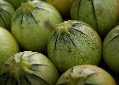 5 Samen Kugelförmige Zucchini Tondo Chiaro di Nizza runde ertagreiche Pflanze