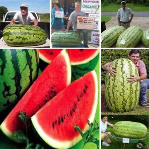 Am-KQ-50Pcs-Giant-Watermelon-Seeds-Sweet-Taste-Fruit-Bonsai-Yard-Garden-Decor