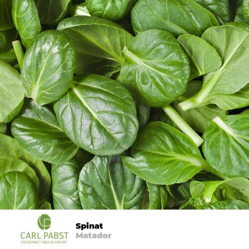 Spinat Matador 400 Pflanzen Samen Saatgut Spinatsamen Gemüsespinat Gartenspinat