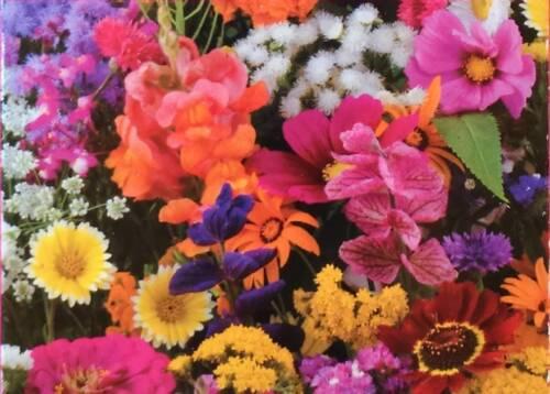 Graines Fleurs été Summer flower , mélange annuelles ,  bisannuelles