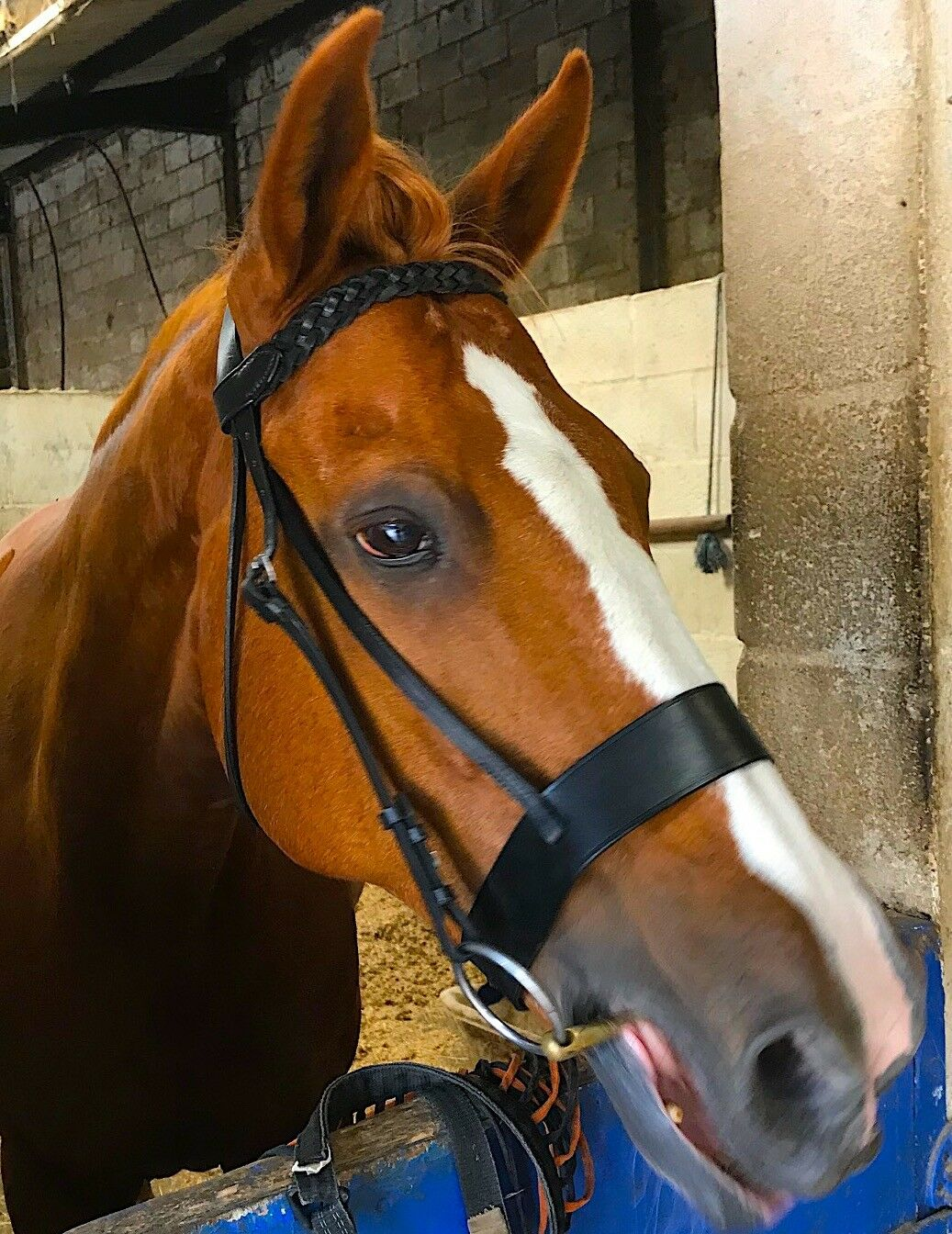 Cwell Equine English Working Hunter Show Hunt Bridle Wide 3/4
