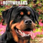 Just Rottweilers 2017 Calendar Willow Creek Press (corporate Author)