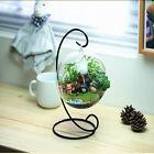 8cm Hanging Glass Flowers Plant Vase Stand Holder Terrarium Container ST2