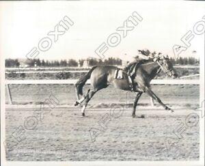 1973 Calder Circuit Piste Montré Cheval & Jockey Course à Finish Line Press