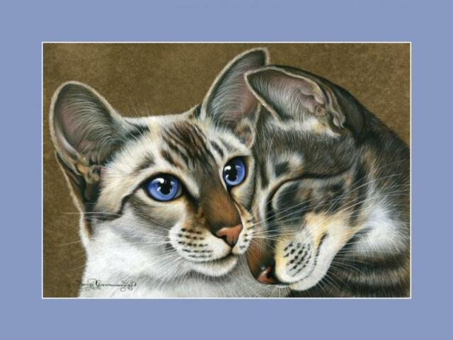 Siamese Cat With Affection Print by I Garmashova