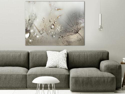 Wandbilder XXL Vlies Leinwand Bild Pusteblume Tau Natur Grau b-C-0268-b-a