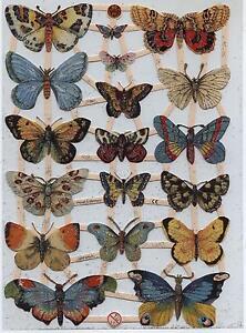 # GLANZBILDER # EF 7297 TOP Schmetterlinge wunderschön mit tollen Farben !