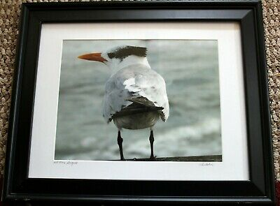 Seagull Flying Picture Photo Print 8x10 Bedroom Bathroom Wall Art Home Decor
