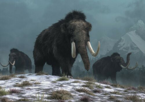 A1 Cool Woolly Mammoths Poster Size 60 x 90cm Extinct Animal Poster Gift #16012