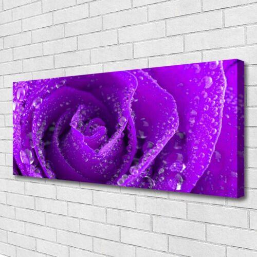 Leinwand-Bilder Wandbild Canvas Kunstdruck 125x50 Rose Pflanzen