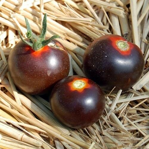 Graines de TOMATE Alki Bleu sang bleu rouge Tomates BIO Ukraine 20 Graines d