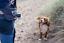 BOGG-bumbag-Dog-walking-waist-bag-Poo-bag-dispenser-waste-carrier-gift-for-owner thumbnail 4