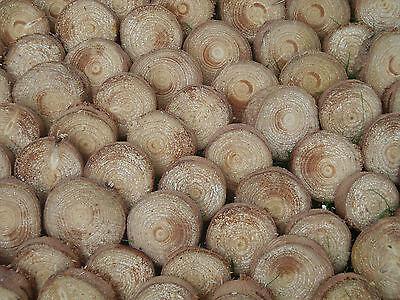"Voorzichtig 40 Spruce Bark Wood Log Slices.decorative Display Logs 3 - 4"" Diameter 1"" Thick En Digestion Helping"