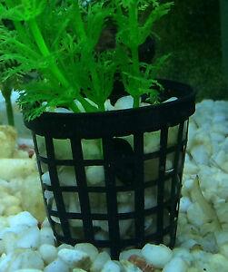 Orchids 50mm Net Pot Propagation QTY 50 Hydroponics Aquatic Plants