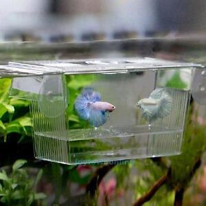 Aquarium-Guppy-Double-Elevage-Eleveur-Piege-Boite-Couvoir-Cadeau