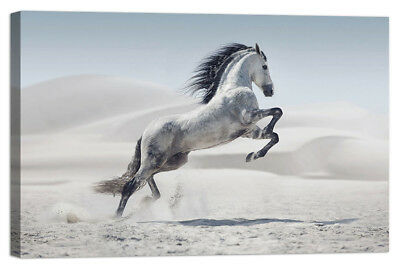 Stampa su Tela Vernice Effetto Pennellate cavallo bianco
