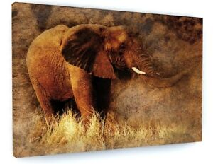 Details About Abstract Elephant Safari Animal Canvas Picture Print Wall Art 4823