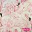EUR-1-55-qm-Rasch-Tapete-277890-Flamingo-Flamingos-Tapete-Flamingo-Rosa