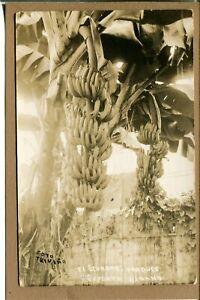 Postcard-Ecuador-Bananas-ready-for-Export-Banana-Tree-Real-Photo-RPPC-665N