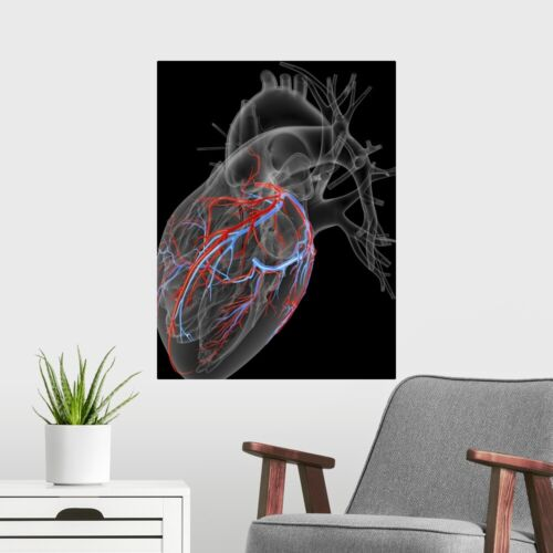 Home Decor Heart with coronary vessels Poster Art Print