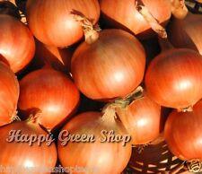 Onion Yellow Spanish Sweet 1500 seeds 5gram/0,18oz Alium cepa vegetable