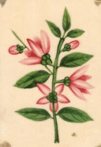 Pink-Flowers-Pith-Painting-Original-early-19th-century-watercolour-painting