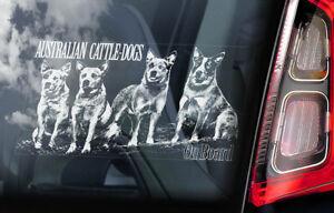 Australiano-Ganado-Perros-Coche-Ventana-Pegatina-Cattledog-Placa-Signo-V01