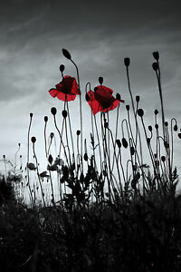 Black white grey red canvas picture poppy field 16x20 wall art image is loading black white grey red canvas picture poppy field mightylinksfo