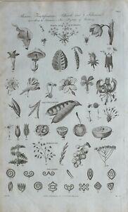 1789-DATED-PRINT-FLOWERS-LENNEUS-BOTANY-FRUCTIFICATION-PEDUNCLE-FOLIATION