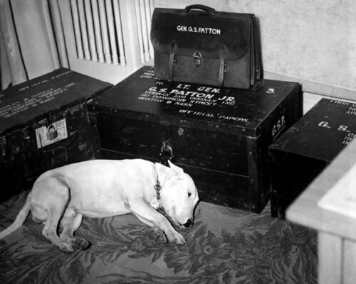 PATTON 8X10 PHOTO WILLIE THE DOG MORNS THE PASSING OF GENERAL GEORGE S