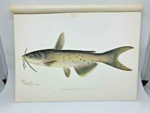 Original-Antique-Denton-Fish-Print-Channel-Catfish