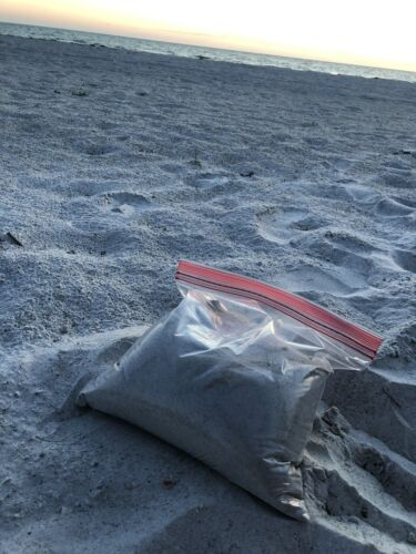Clearwater Beach Florida Sand 16OZ