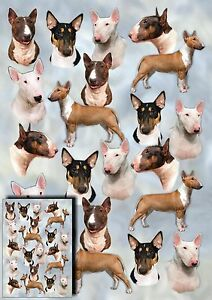 Bull-Terrier-Dog-Gift-Wrapping-Paper-By-Starprint-Auto-combined-postage