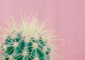 A1-Cacti-Cactus-Cool-Poster-Art-Print-60-X-90cm-180gsm-Hers-Teen-Fun-Gift-16912