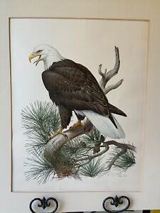 Signed-numbered-limited-edition-lithograph-Roger-Tory-Peterson-American-Eagle