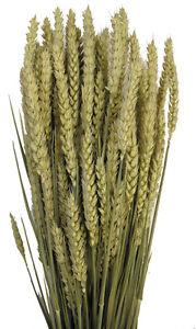 Séchées blé-orge-tarwe triticum pour compositions florales large 250g tas-afficher le titre d`origine OcqmzD2S-07184957-510777942