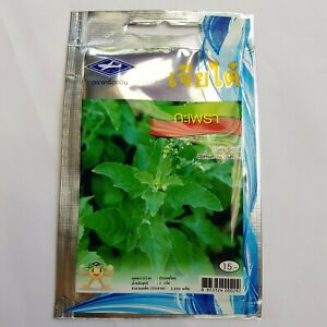 2400-seeds-Thai-Holy-Basil-Green-Kaprao-Ocimum-Sanctum-Tulasi-Herb-Food-Spicy