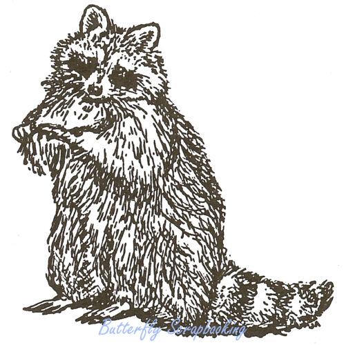 Raccoon Wildlife Wood Mounted Rubber Stamp NORTHWOODS E659