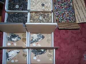 100 fossils shark teeth ammonites Megalodon stingray shells and 100 gemstones